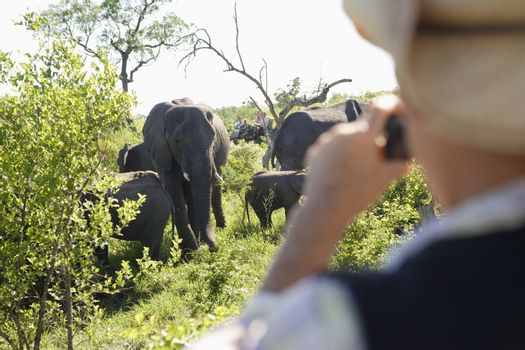 Man Photographing Group Of Elephants