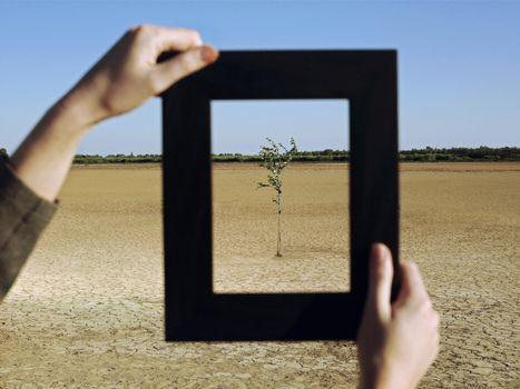 Closeup of woman's hands framing plant in desert