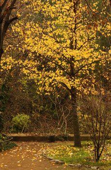 Autumn landscape: road in the Tbilisi botanic garden
