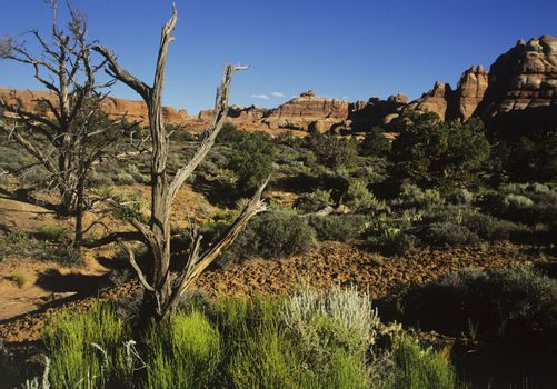 Vegetation in rocky landscape