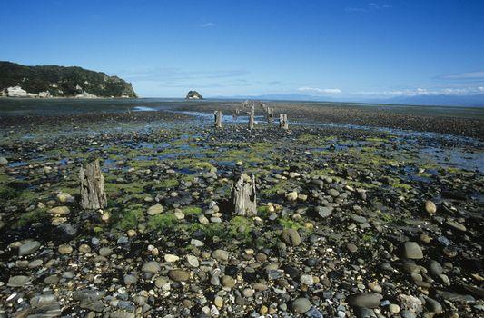 Stumps on stone beach