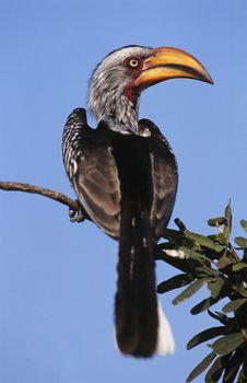 Hornbill sitting on branch