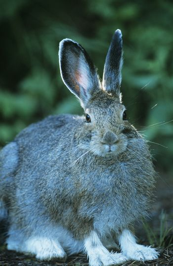Hare sitting outdoors