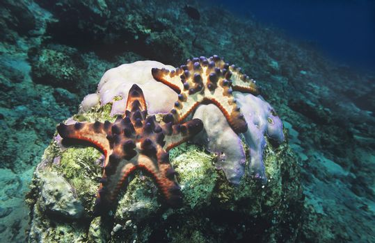 Star fish on coral reef