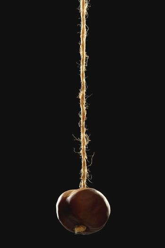 Conker on string black background