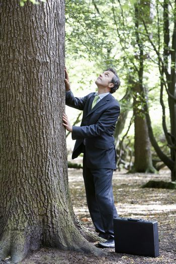 Businessman looking up while stroking tree trunk in forest