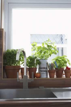 Herbs growing in flowerpots at kitchen sink