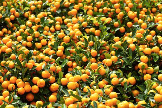 Mandarin for Chinese New Year