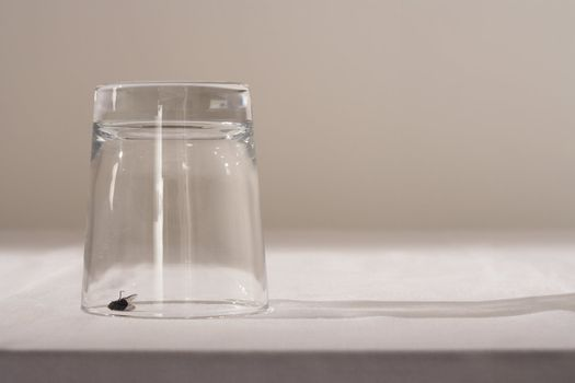 Fly under glass on table