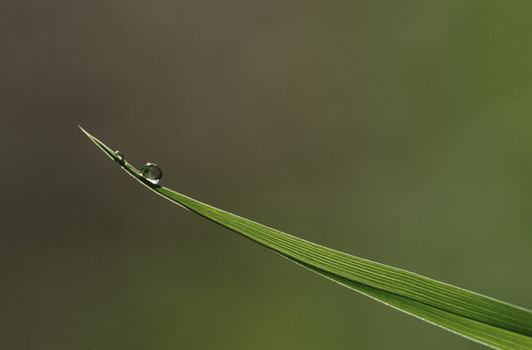 Close-up of dew drop on blade of grass