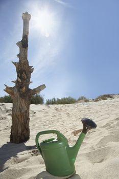Watering can by dead tree on sandy beach