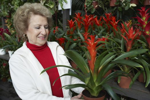 Senior woman looking at potted plant in botanical garden