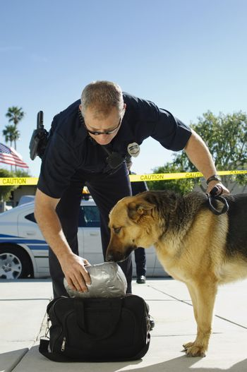 Trained dog sniffing the bag with police officer at crime scene