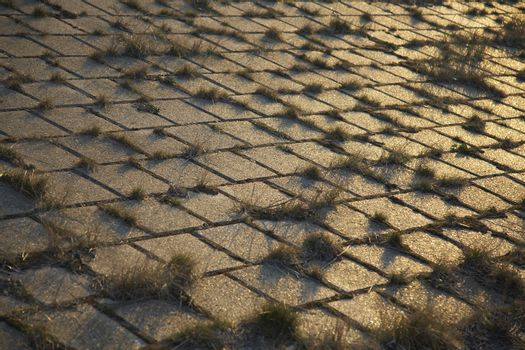 Grass growing through cobblestones