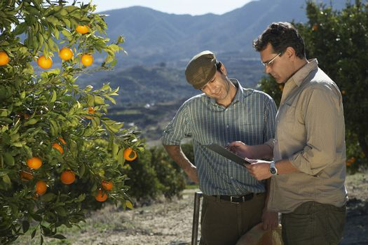 Middle age farmer and supervisor analyzing checklist in farm
