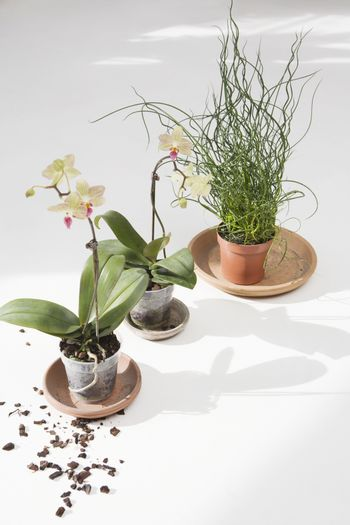 Potted plants with dirt on floor
