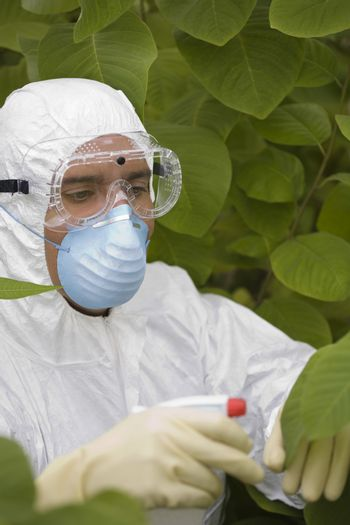 Male worker in protective mask and suit spraying plants in greenhouse