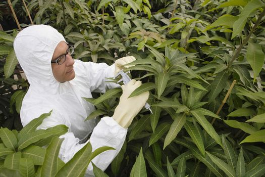 Male worker in protective overalls measuring plants in greenhouse