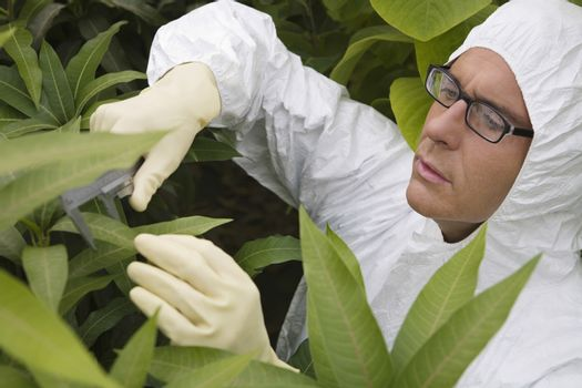 Male worker in protective suit measuring plants in greenhouse