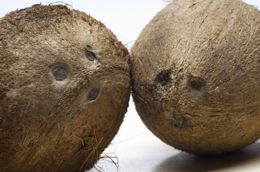 Two coconuts isolated over white background