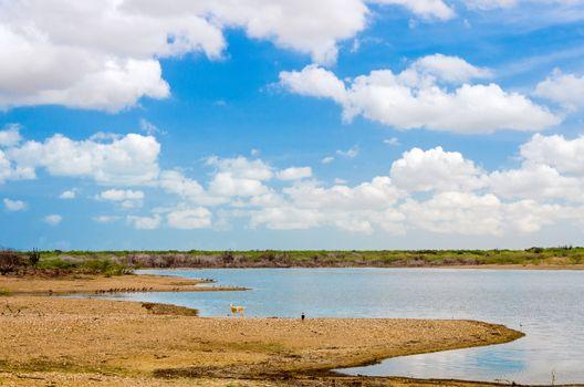 Lake and wildlife in La Guajira, Colombia