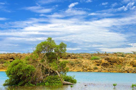 View of mangrove tree just off the coast of La Guajira, Colombia