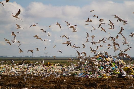 The dump