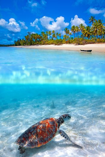 Green sea turtle and tropical beach above and below water