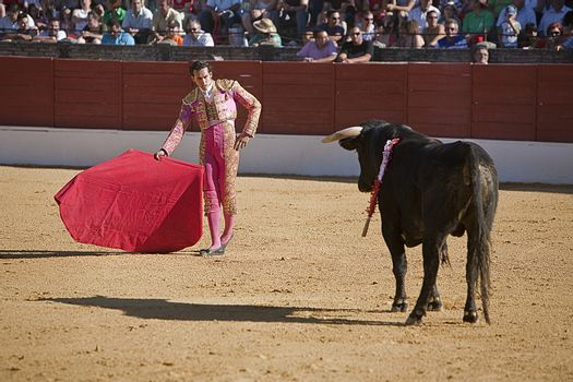 Bullfight in Baeza to the new values of the Andalusia bullfighting schools, Baeza, Jaen province, Andalusia, Spain,