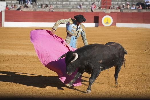 Bullfight in Baeza to the new values of the Andalusia bullfighting schools, Baeza, Jaen province, Andalusia, Spain, 27 june 2009