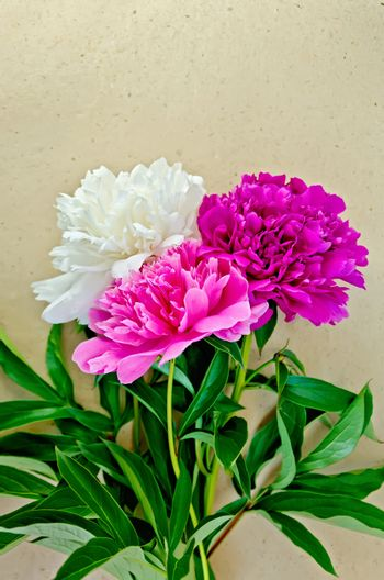 Peonies on wrapping paper