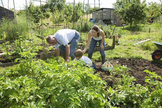 Family with boy gardening