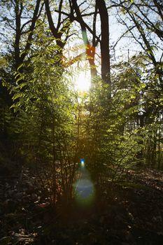 Sunlight in Trees