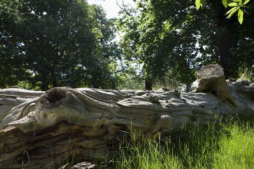 Closeup of dead tree trunk fallen in a forest