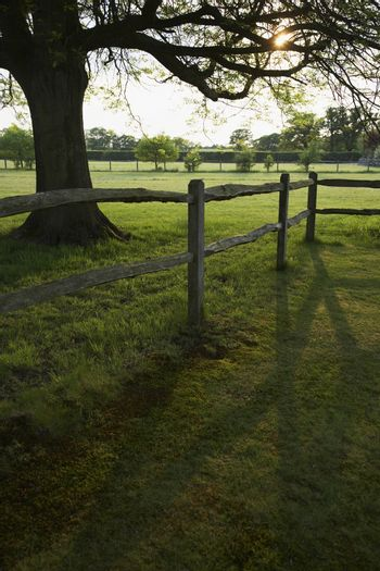Green field with wooden fence and trees