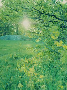 Sun shining trough fresh spring green