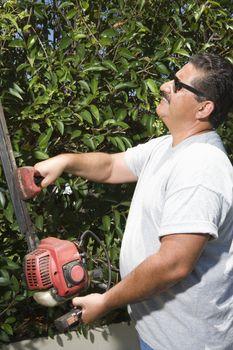 Man cutting garden hedge