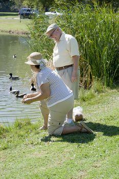 Senior couple feeding ducks