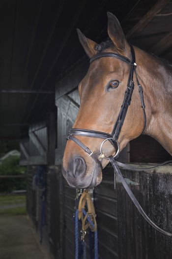Side view of a brown horse in the stable