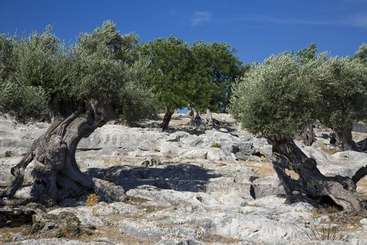 Trees on rocky hill