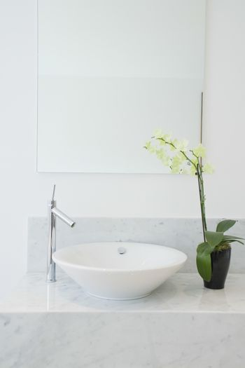 Sink and potted plant in bathroom