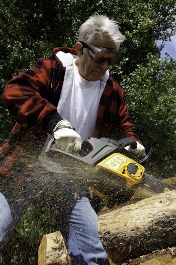 Forestry worker cutting tree with chainsaw