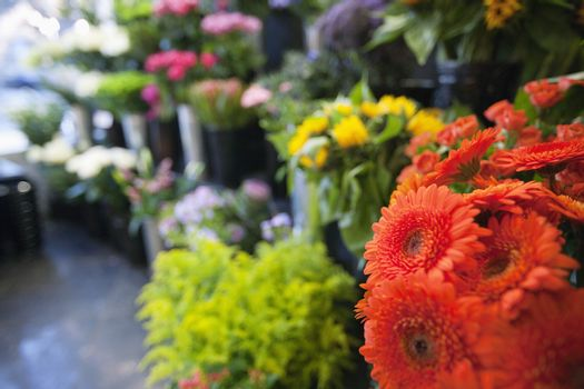 Fresh flowers at florist shop
