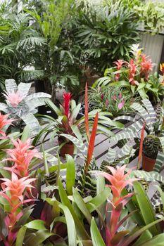 Plants in botanical garden