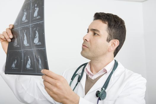 Mid adult doctor examines x-ray