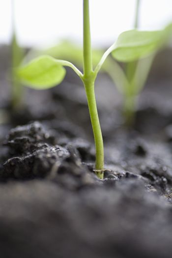 Close up of seedling