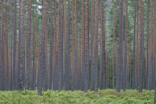 Norwegian woodland Trogfjell
