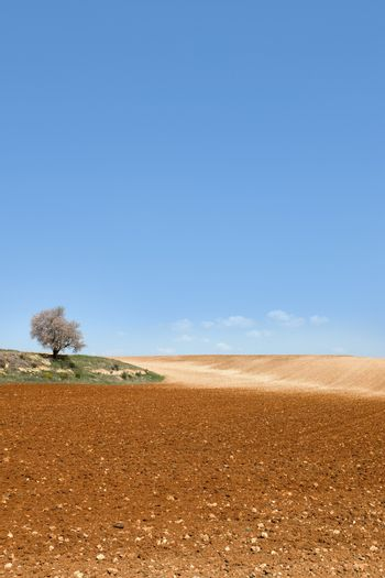 View of cultivated field and blue sky