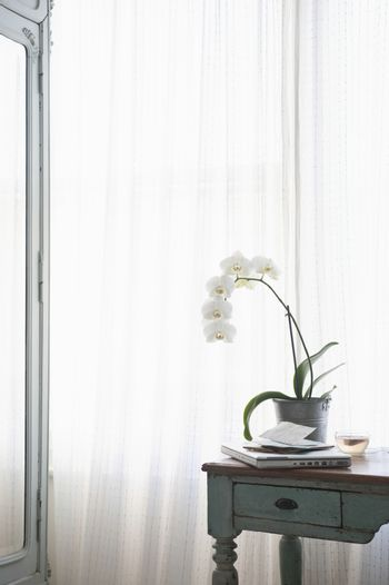 Orchid and laptop with letters on table at window