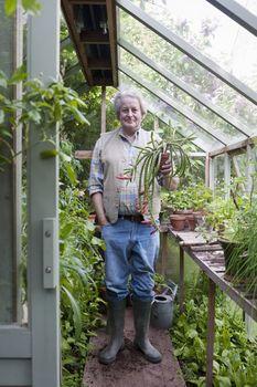 Gardener stands in greenhouse holding potplant